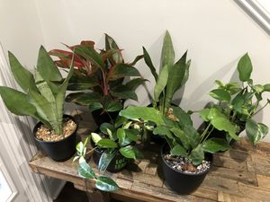 Multiple plant purge for Sale in Mt. Juliet, TN