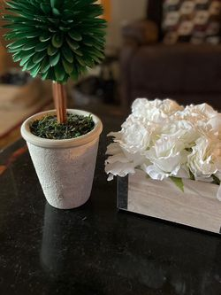 Beautiful Flower and Plant Arrangement for Sale in Fort Lauderdale,  FL