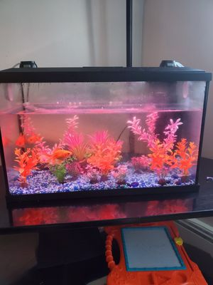 Fish tank, accessories and 3 golfish for Sale in Salem, MA