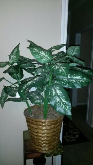 Fake plant for Sale in Deer Park, TX