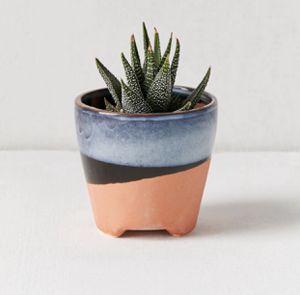 UO Small Succulent Planter Pot for Sale in Austin, TX