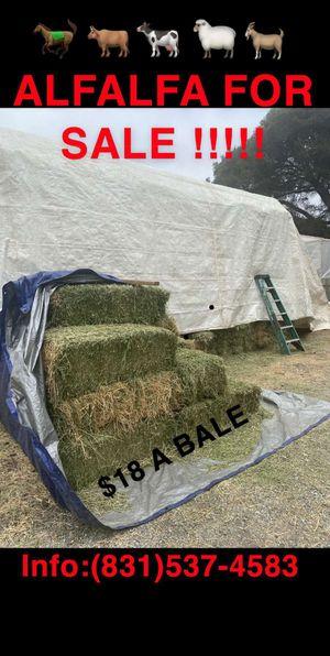 Alfalfa for Sale in Castroville, CA