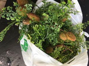 Flower pots for Sale in Friendswood, TX