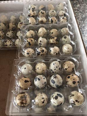 Quail eggs for Sale in Lodi, CA