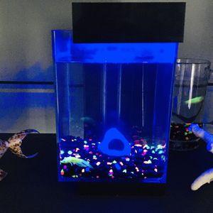 Glow In The Dark Fish Tank! for Sale in St. Cloud, FL