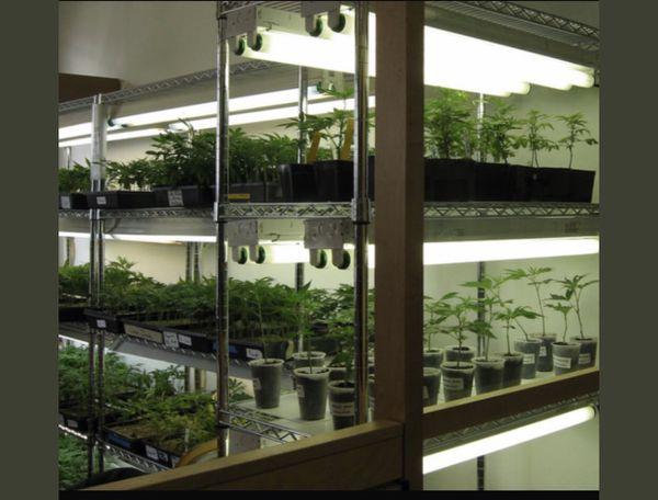 High quality indoor clones !!