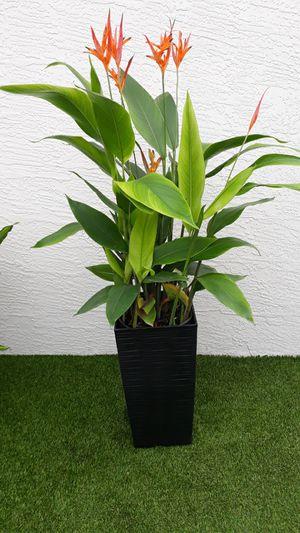 "AVE del paraíso plant pot incluye 18"" for Sale in Hialeah, FL"