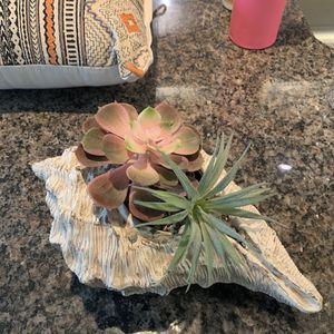 Decorative Faux Succulent Cowry Shell for Sale in Arlington, VA