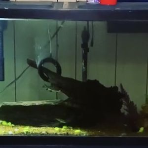 55 Gallon Tank for Sale in Harrisburg, PA
