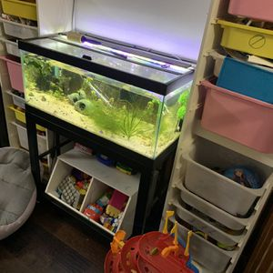 40 Gallon Breeder Aquarium Full Setup for Sale in Federal Way, WA
