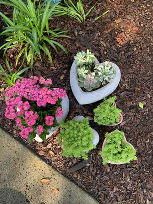 Heart-shaped plant creations -read details for Sale in Ponte Vedra Beach, FL