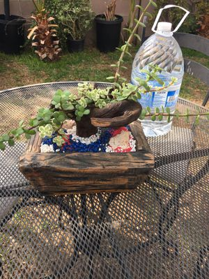 Rustic Wood Vase with To Different Type Of Portulacaria Money Succulent for Sale in Fontana, CA