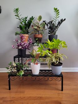3 Step Plant Stand for Sale in Montgmry, IL