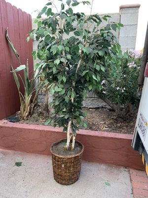 Fake plant for Sale in Santee, CA