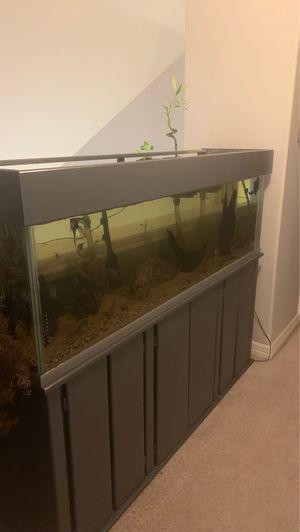 (72x18x21) 125 gallon fish tank/angel fish for Sale in Katy, TX