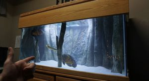 75 Gallon Fish Tank for Sale in Copper Canyon, TX