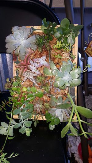 Living wall succulent for Sale in Miami, FL