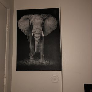 Elephant for Sale in Denver, CO