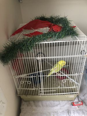 Love bird with cage and food for Sale in Nashville, TN