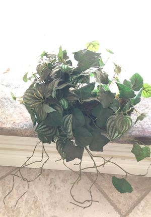 Fake plant for Sale in Longwood, FL