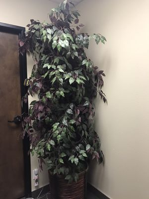 Fake green and purple ficus tree for Sale in Placentia, CA