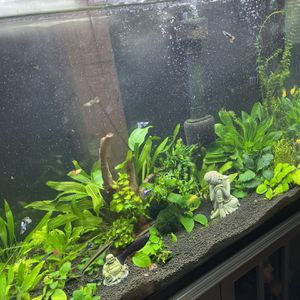 Fish Tank Size Small for Sale in Pasadena, CA