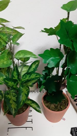Brand new set of 2 assorted artificial Greenery plants in clay pots great for indoor outdoor on a tabletop or Shelf for Sale in Oviedo, FL