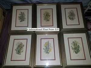 6 Informational Plant Prints $30 for Sale in Dresden, OH