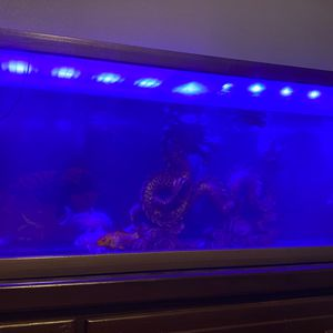 Fish Tank Decoration for Sale in Fontana, CA