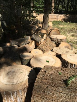 Free Oak fire wood for Sale in Springfield, VA