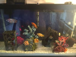 29 Gallon Aquarium-Canister Filter, Aquaflo Filter, Heater, Bubbler for Sale in Edgewood, KY