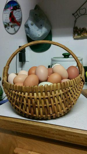 Fresh brown eggs for Sale in Cumberland, VA