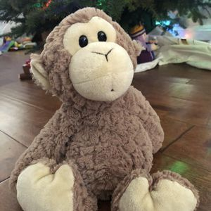 Who Me monkey- Pet Adoption for Sale in Lake Forest, CA