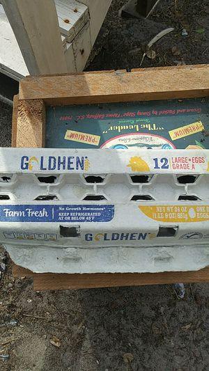 12 Cardboard Egg Cartons for Sale in Port Richey, FL