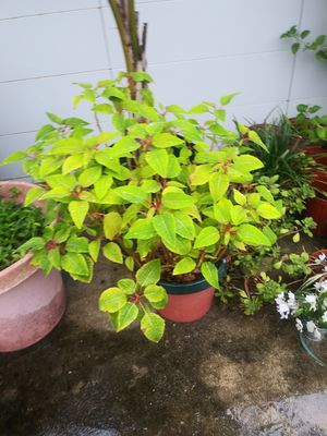 Plant for Sale in Lake Worth, FL