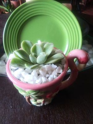 Succulent beautifully flamingo decorated for Sale in Wimauma, FL
