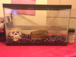 10 gallon fish or turtle tank with everything included even food! for Sale in North Versailles, PA