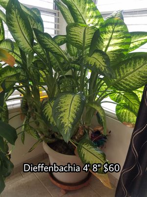 Plants for sale for Sale in Henderson, NV