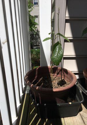 Pots with plants for Sale in Woodbridge, VA