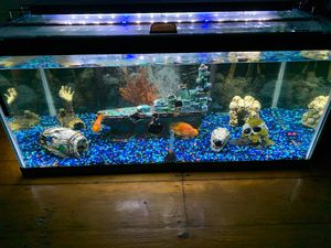 40 breeder 2 parrot fish 1 convict 1 Raphael catfish for Sale in Boston, MA