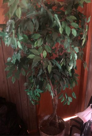 In house tall fake plant for Sale in Columbus, OH