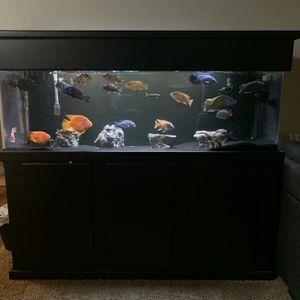Aquarium for Sale in West Covina, CA