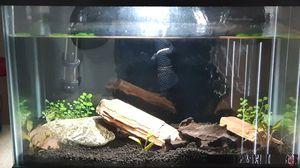 5 gallon fish tank for Sale in Lakewood, WA