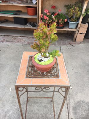 Tany ceraramic centerpiece with jade plant for Sale in Fontana, CA