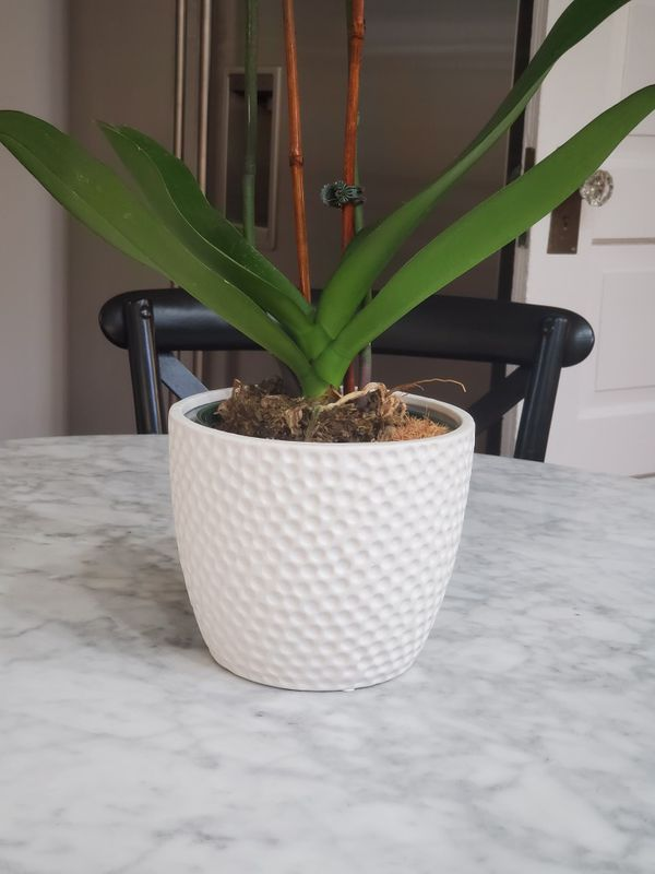 "New Contemporary White Flower Pot Textured Planter Cachepot 6.25"" Round by 5.25"" High"