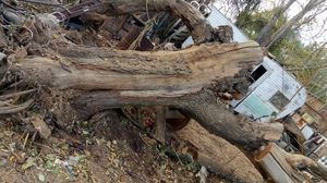 Logs, wooden Tree trunks FREE for Sale in Jurupa Valley, CA