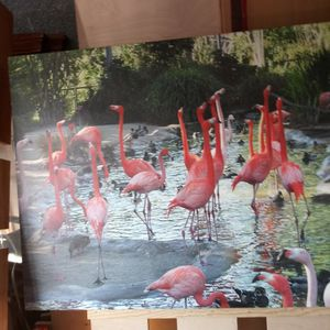 Flamingos Picture for Sale in Baldwin Park, CA