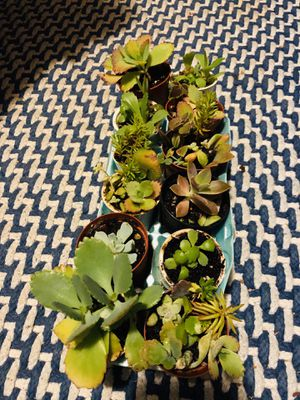 Succulent starters for Sale in Superior Charter Township, MI