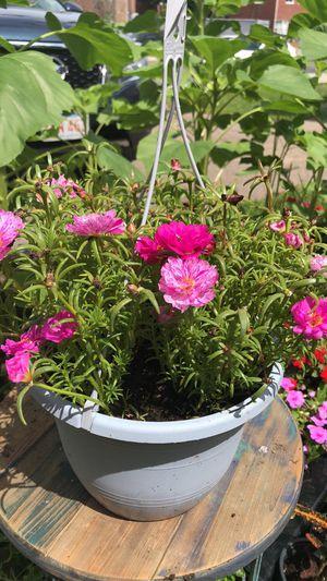 PLANTS ON SALE!!!! for Sale in Boston, MA