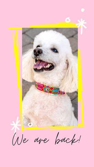 Dog Collar Pet Handmade Dogmom collar for Sale in Orlando, FL